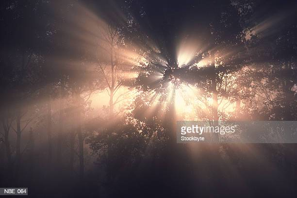 Rays of sun in forest