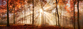 Rays of sunlight in a misty forest in autumn, a panorama with magical atmosphere and warm colors