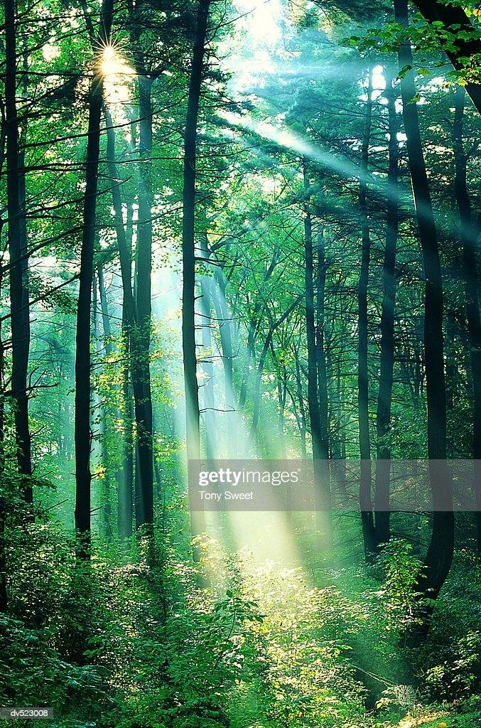 Rays through the forest, Cumberland Gap, Kentucky, USA