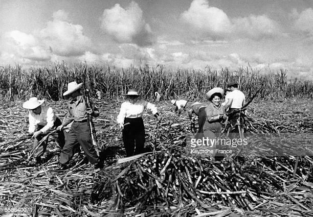 Récolte de la canne à sucre dans la ferme coopérative de Maello Capote à Cuba le 21 février 1964