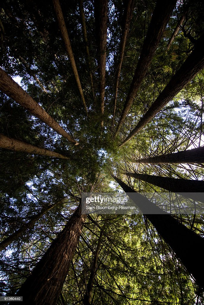 Reach for the heavens : Stock Photo