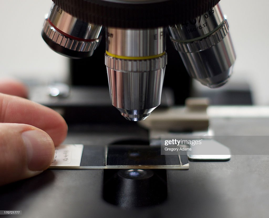 Reading Slides on a Microscope : Stock Photo