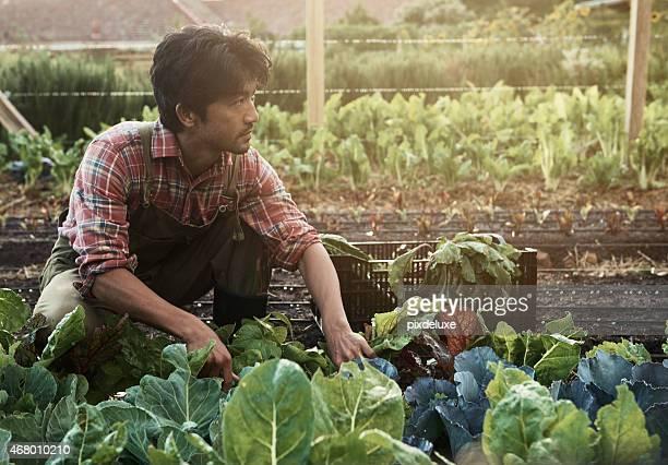 Prêt pour la récolte