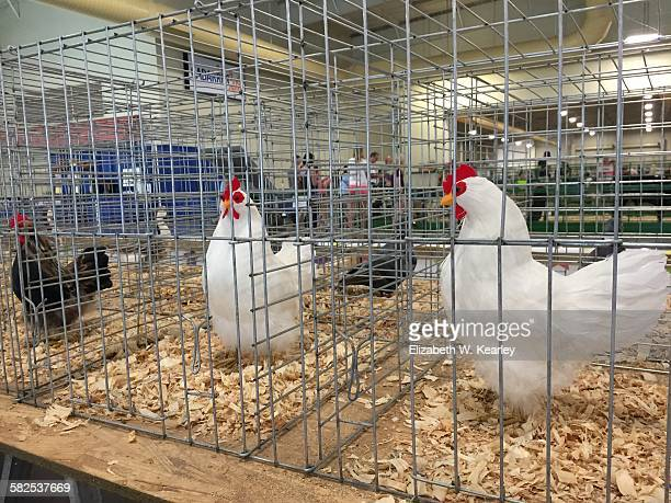 Real birds banned at state fairs due to bird flu These are fake birds at Cabarrus County Fair Sept 20 2015