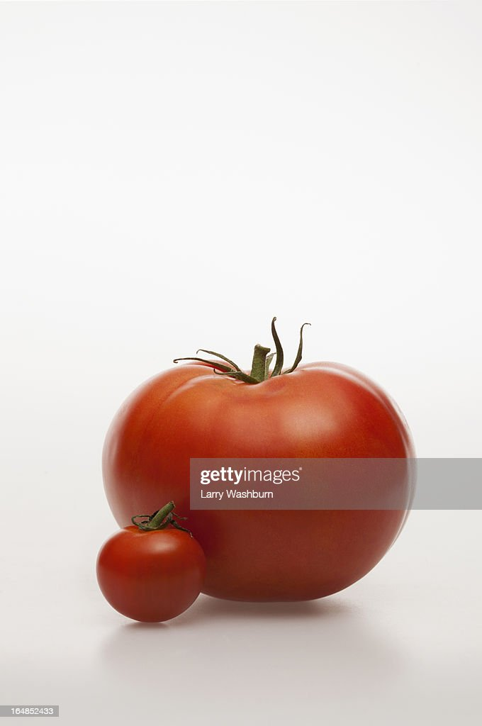 A really small tomatoes next to a really big tomato