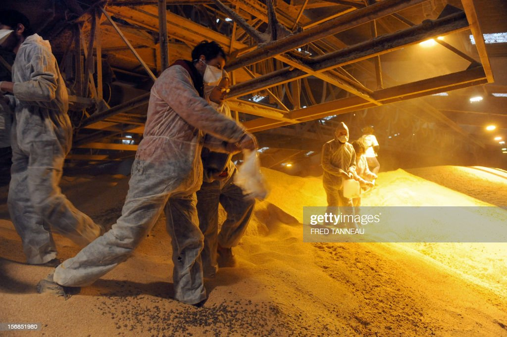 Reaper volunteers pour castor oil on soybeans on November 23, 2012 in a warehouse where transgenic soybeans are stored in Lorient harbour, western France, during a demonstration to denounce the presence of this 'toxic' product in the food chain.