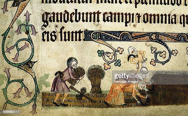 Reaping and binding sheaves ca 1330 Found in the collection of British Library Artist Anonymous