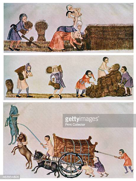 Reaping carrying and carting c13001340 Scenes from the Luttrell Psalter A print from Art History and Literature Illustrations by Jessie Noakes Virtue...