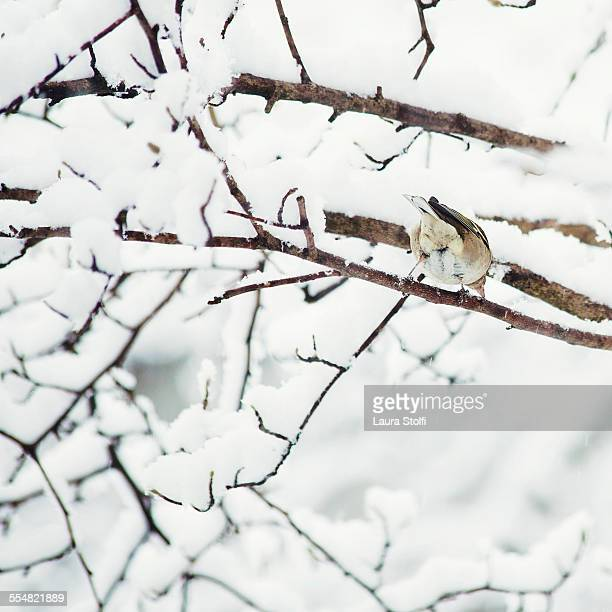 Rear sight of bird perching on tree in snow
