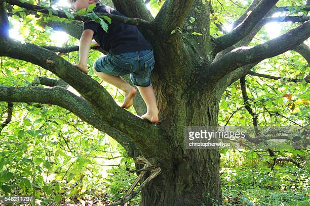 Rear view of  a Boy climbing tree