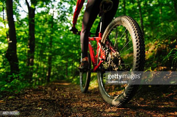 Rear view of a young woman riding a mountain bike in a forest, Poland.