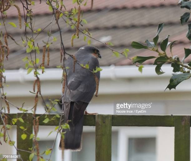 Rear View Of Bird Perching On Fence