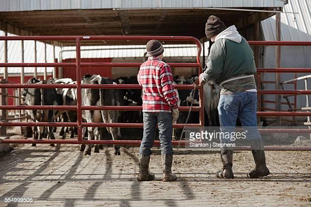 Rear view of boy father closing gates in dairy farm yard