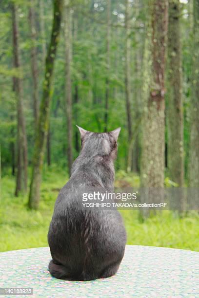 Rear view of cat, Nagano Prefecture, Honshu, Japan