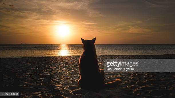 Rear View Of Cat Relaxing On Sandy Beach At Sunset