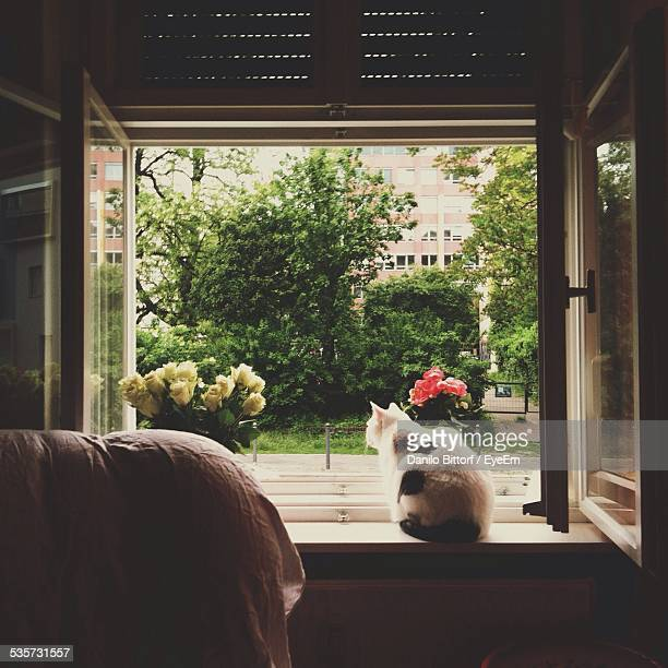 Rear View Of Cat Sitting On Window Sill And Looking At View