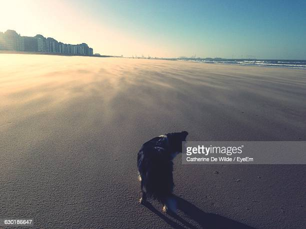 Rear View Of Dog On Beach