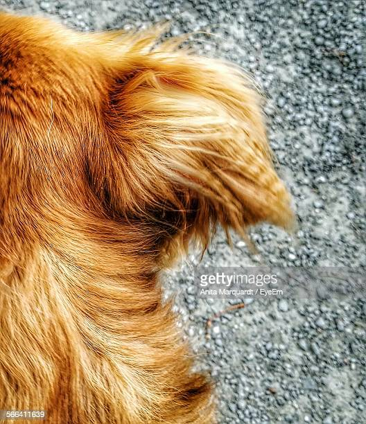 Rear View Of Dog On Road