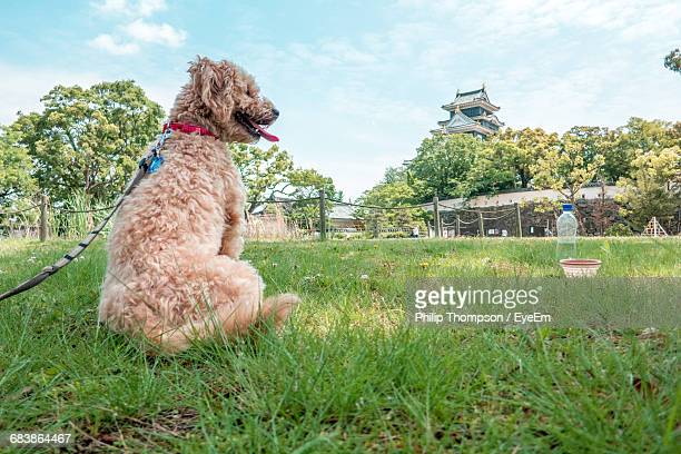 Rear View Of Dog Sitting On Grassy Field With Okayama Castle In Background