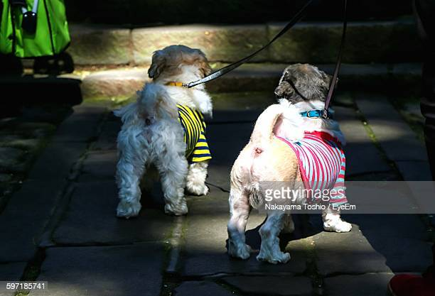 Rear View Of Dogs In Clothing Standing On Street