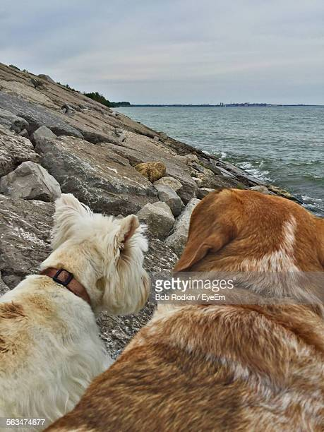 Rear View Of Dogs Sitting At Sea Side Against Sky