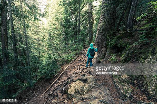 Rear view of female hiker moving down steep mountain forest, British Columbia, Canada
