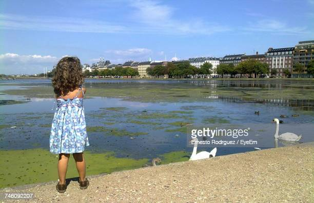 Rear View Of Girl Standing On Wall By Swans In Lake