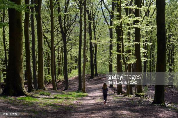 Rear View Of Girl Walking Amidst Trees In Forest
