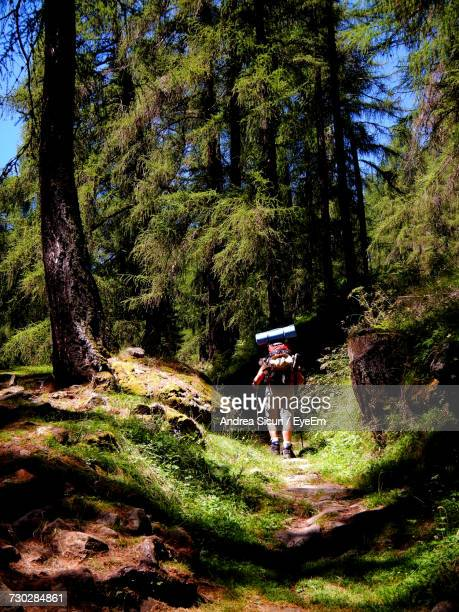 Rear View Of Hiker Walking At Forest