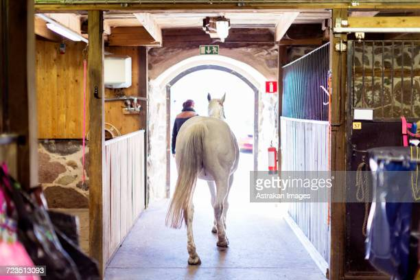 Rear view of horse and woman walking towards doorway in stable