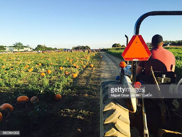Rear View Of Man Driving Tractor Amidst Pumpkin Farm