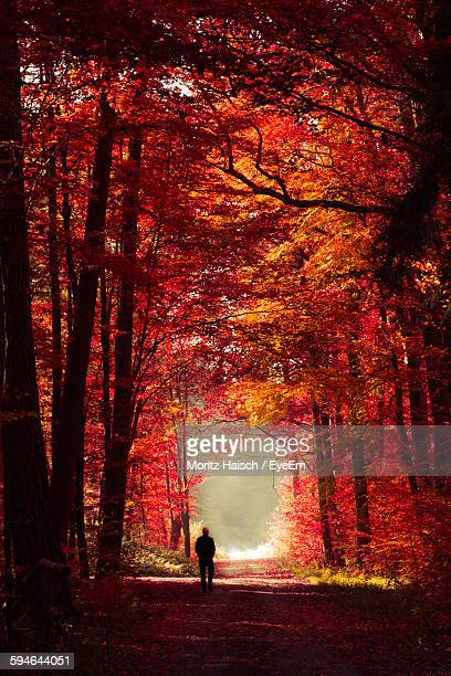 Rear View Of Man On Footpath Amidst Trees In Forest During Autumn