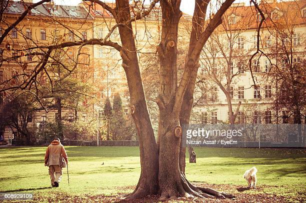 Rear View Of Man Walking By Tree At Park