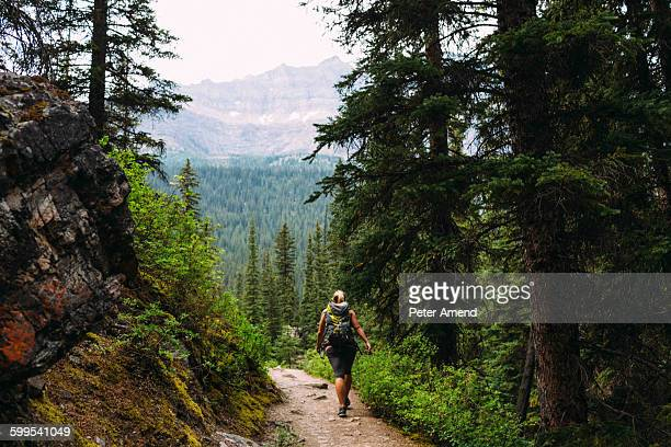 Rear view of mid adult woman trekking on forest trail in mountains, Moraine lake, Banff National Park, Alberta Canada