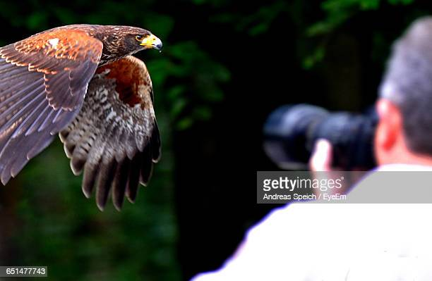 Rear View Of Photographer Photographing Eagle