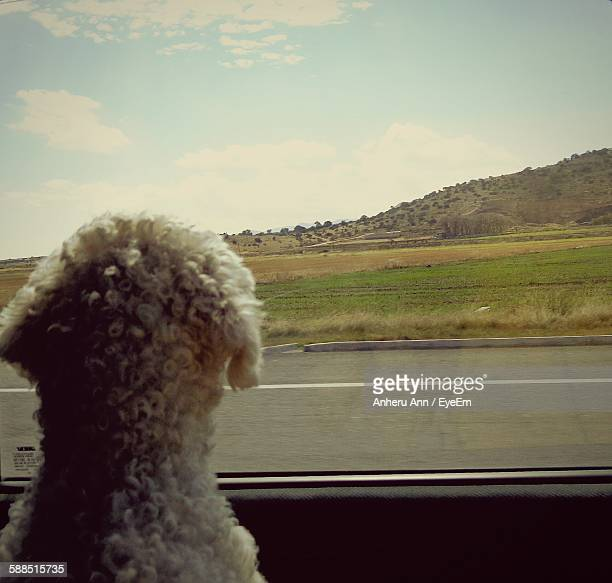 Rear View Of Poodle Looking At Mountain Through Car Window