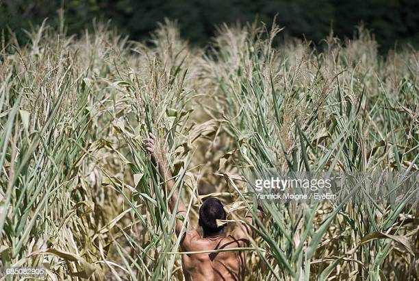 Rear View Of Shirtless Man Amidst Crops On Agricultural Field