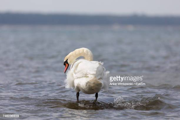 Rear View Of Swan Standing At Beach