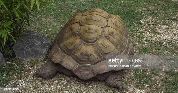 Rear View Of Tortoise On Grass