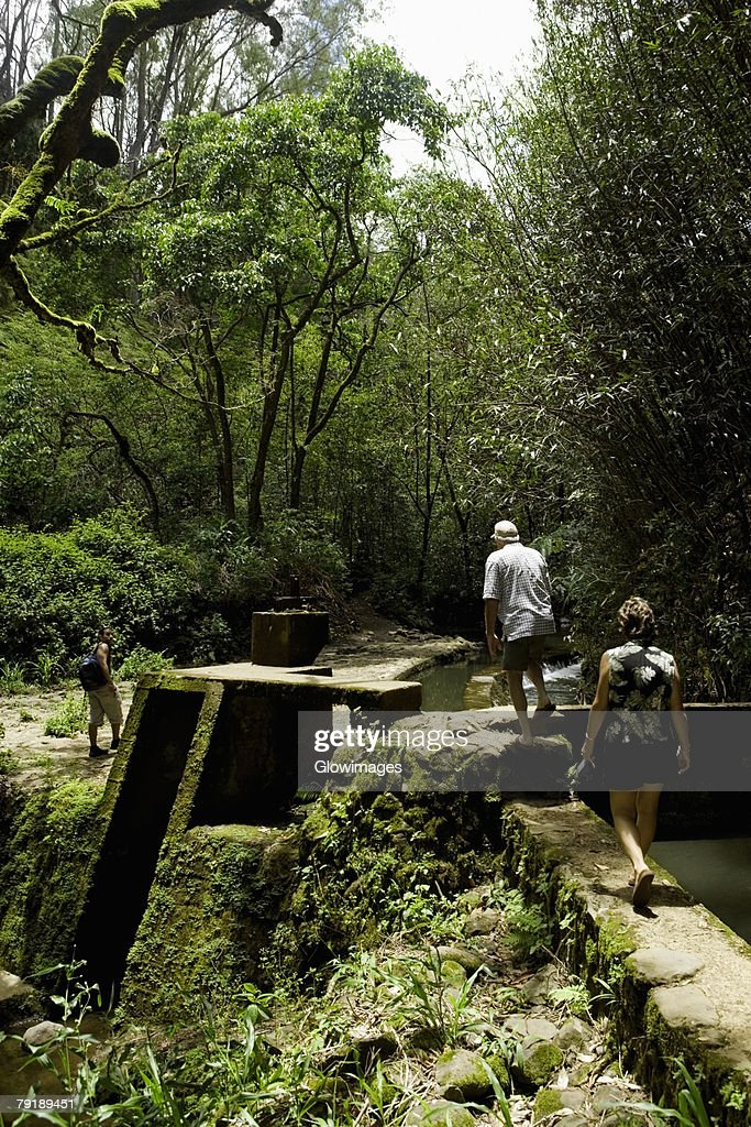 Rear view of two tourists walking in an orchard, Twin Falls, Maui, Hawaii Islands, USA : Foto de stock