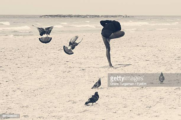 Rear View Of Woman Practicing Yoga By Pigeons At Sandy Beach