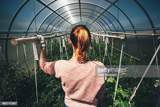 Rear view of woman standing amidst plants in greenhouse