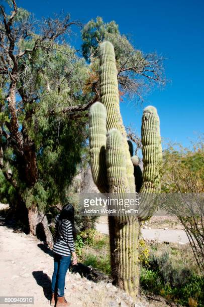 Rear View Of Woman Standing By Cactus Against Sky