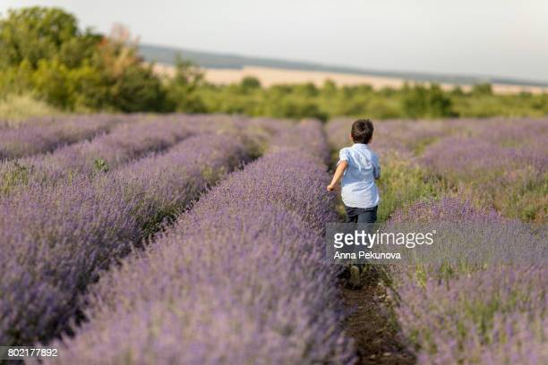 Rear view of young boy running in a lavender field