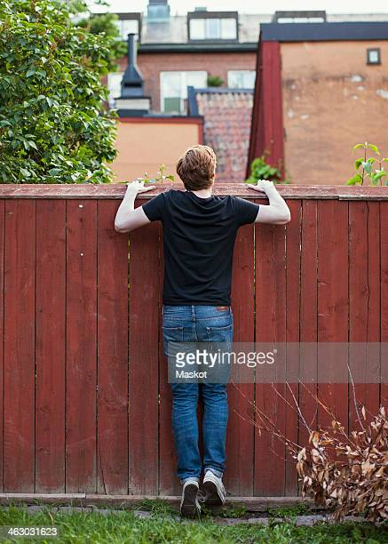 Rear view of young man peeking over wooden wall at yard