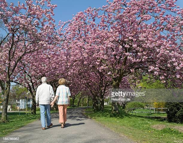 Rückansicht auf altes Paar walking auf blühenden Kirsche Bäume