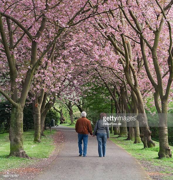 Vista traseira do casal idoso a andar em Desabrochando árvores de Cereja