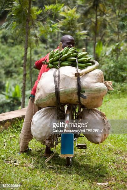 Rear view portrait of man pushing bicycle in rainforest with stacked bananas, Masango, Cibitoke, Burundi, Africa