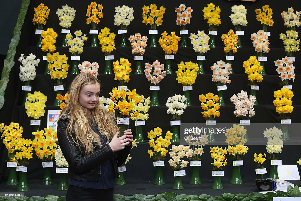 Rebekah Scamp admires a 'Puppet' daffodil on the 'Quality Daffodils' stall at the RHS Great London Plant Fair on March 26, 2013 in London, England. The fair takes place in the RHS Horticultural Halls on March 26-27, 2013 and features numerous botanical displays, advice from the RHS, Alpine Garden Society stalls and the results of the 'Early Daffodil and Hyacinth Competition'.