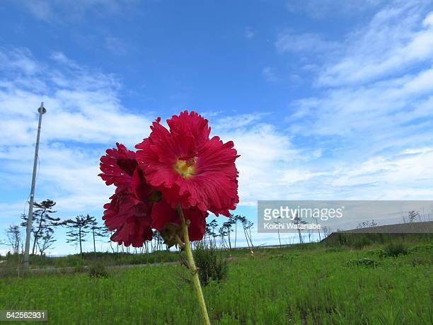 Reborn flower